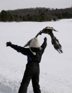 Golden Eagle being released.  Photo by Gerianne Carillo
