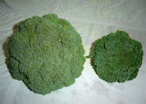Broccoli grown with bio-char