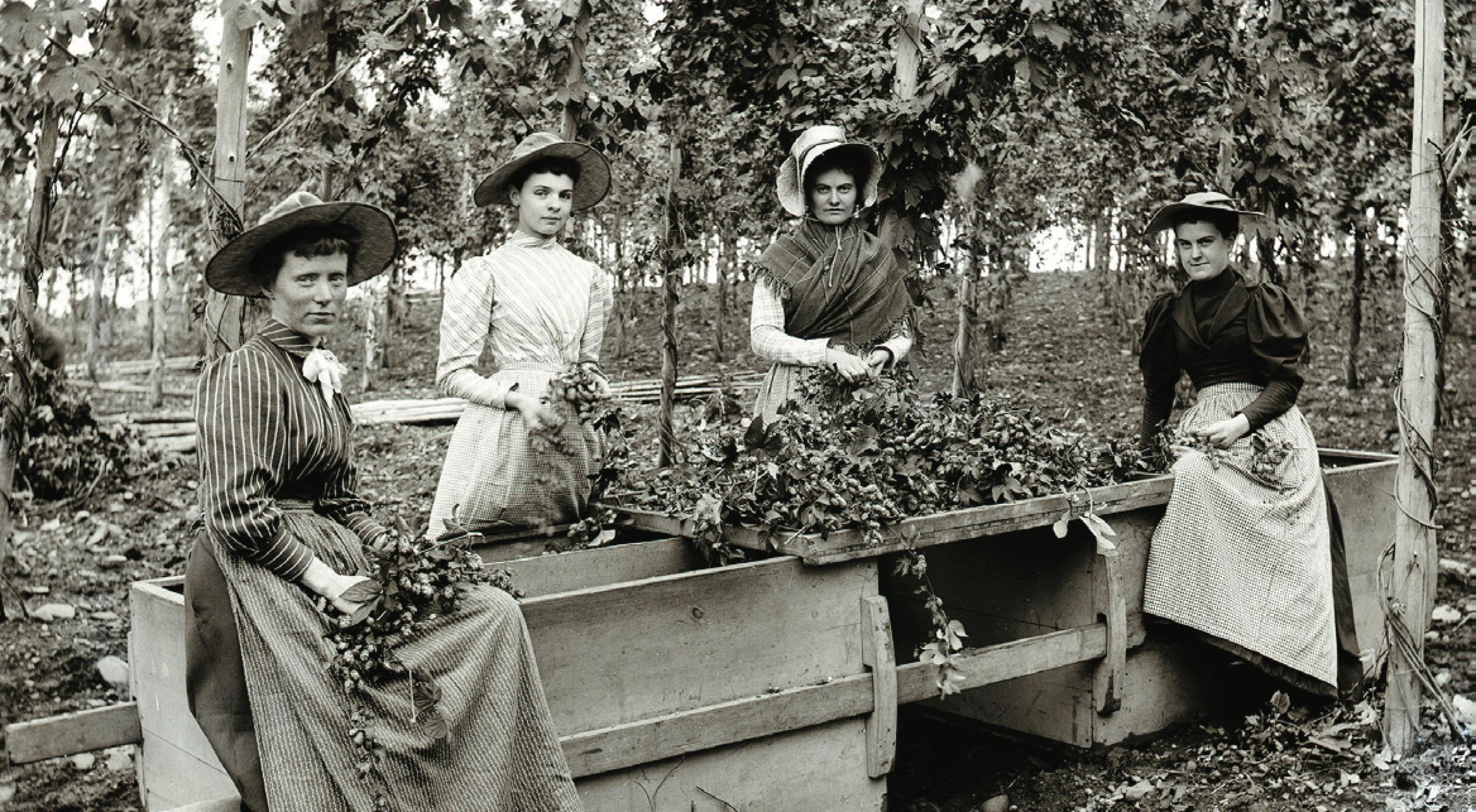 Hop Pickers, ca. 1880-1899